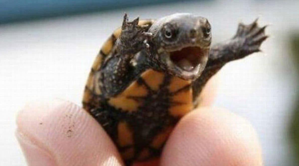 Les médecins trouvent une tortue dans le vagin d'une femme