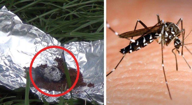Vous détestez les moustiques et les mouches? Essayez ce remède qui vient directement du Liban