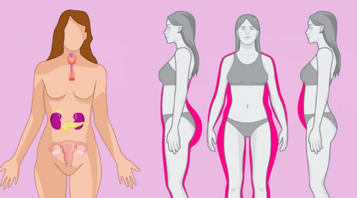 Lorsqu'elles sont déséquilibrées, ces 4 hormones vous empêchent de perdre du poids : voici comment les équilibrer