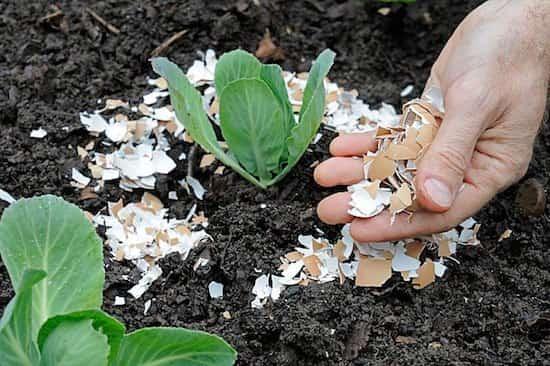 5 utilisations des coquilles d'œufs pour votre jardin