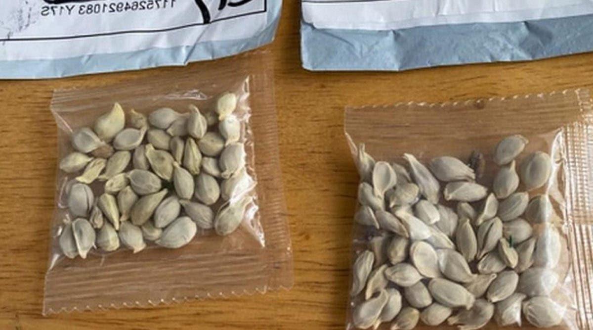 De mystérieuses graines expédiées depuis la Chine inquiètent le ministère de l'agriculture