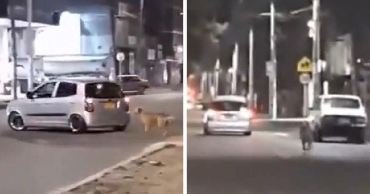 Un chien court derrière la voiture de son maître qui vient de l'abandonner (Vidéo)