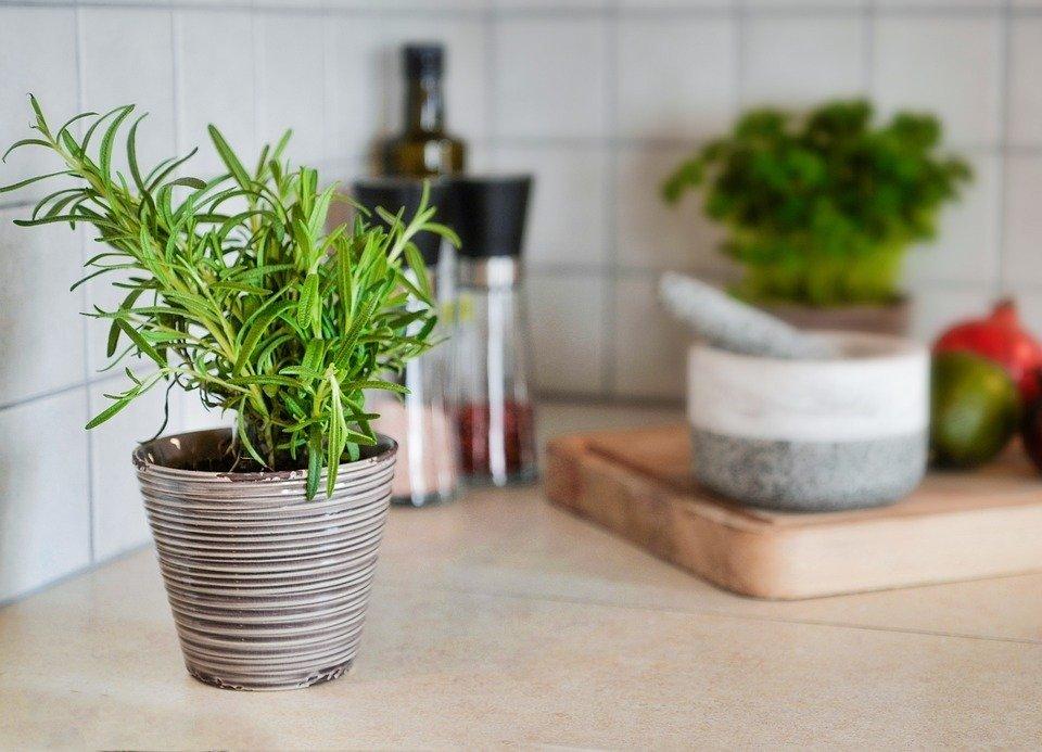 Ces 4 plantes dans votre chambre à coucher soignent l'insomnie et l'apnée du sommeil